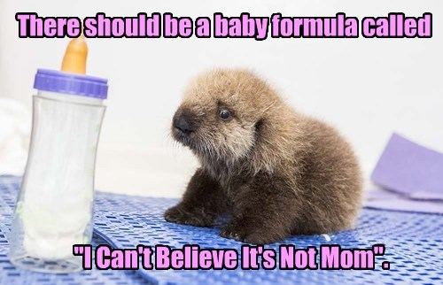 baby cute funny animals - 8539772928