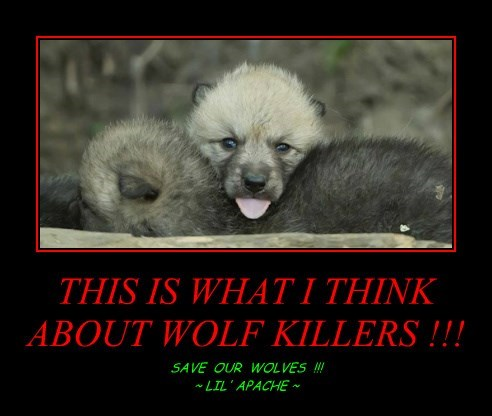 THIS IS WHAT I THINK ABOUT WOLF KILLERS !!!