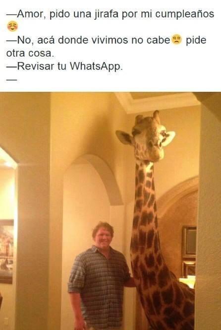 jirafa en la casa