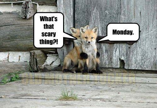 foxes,scary,cute animals,monday,captions