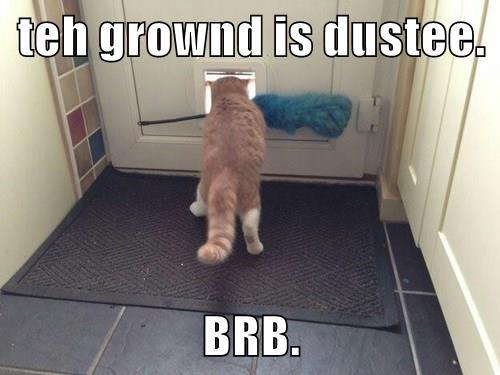 Cats captions animals funny - 8540123136