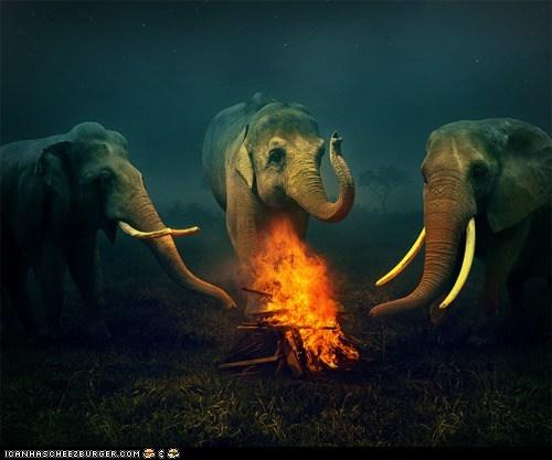 animals - 8540123904