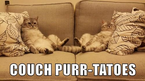 captions,couch potato,Cats,funny