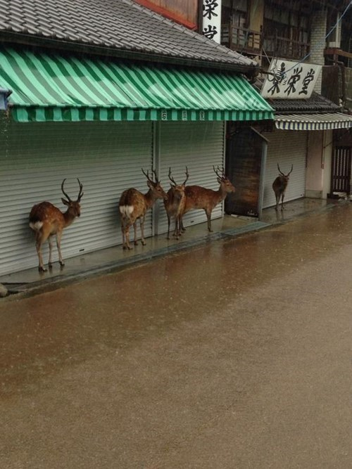 funny deer image Adorable Deer Duck Under Buildings During a Passing Storm