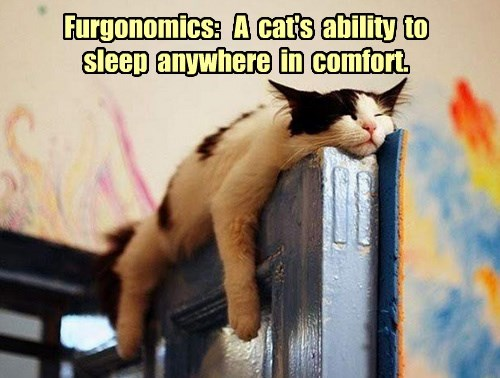 Furgonomics:   A  cat's  ability  to sleep  anywhere  in  comfort.