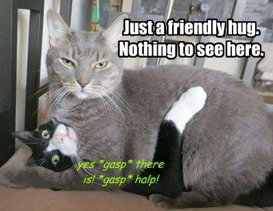 Cats,funny,hug,captions