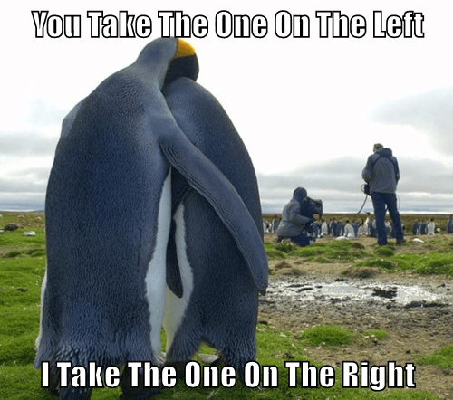 animals penguins captions funny - 8540721920