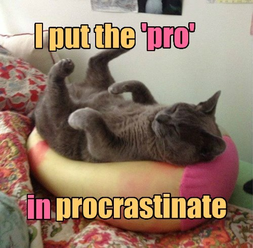 cat pro procrastinate captions - 8540734976