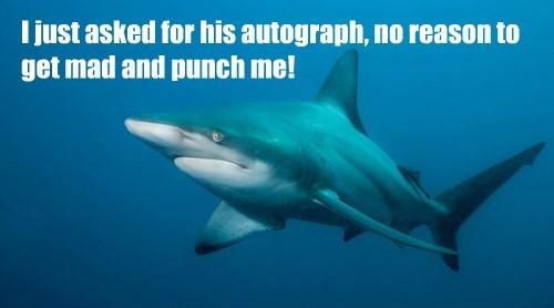 captions sharks funny - 8540891904