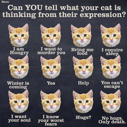 funny cats image Here's a Handy Guide to Interpret What Your Cat is Feeling