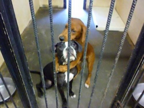 perritos rescatados