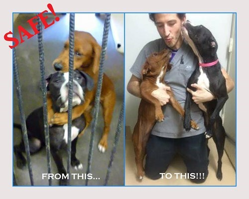 cute dogs rescue A Heartbreaking Picture Helped Save These Shelter Dogs