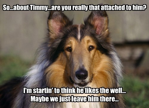 dogs,timmy,lassie,captions