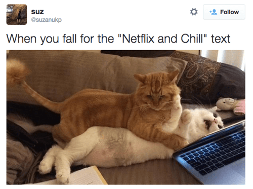 "Cat - suz Follow @suzanukp When you fall for the ""Netflix and Chill"" text"