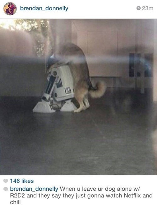Photo caption - brendan_donnelly 23m 146 likes brendan_donnelly When u leave ur dog alone w/ R2D2 and they say they just gonna watch Netflix and