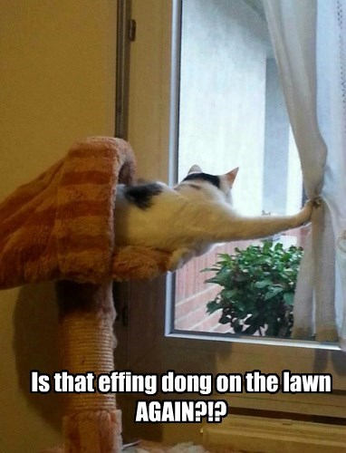 Is that effing dong on the lawn AGAIN?!?