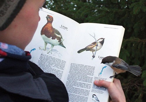 funny birds image Hey, What Does This Book Say About Me?