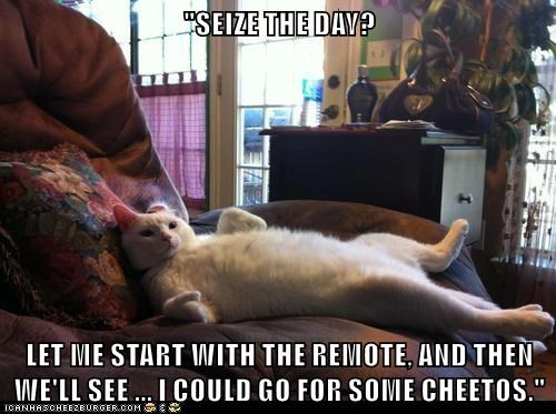 cat,remote,seize,caption,cheetos