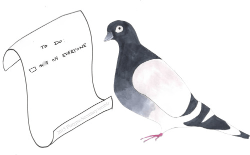 funny memes pigeon to do list