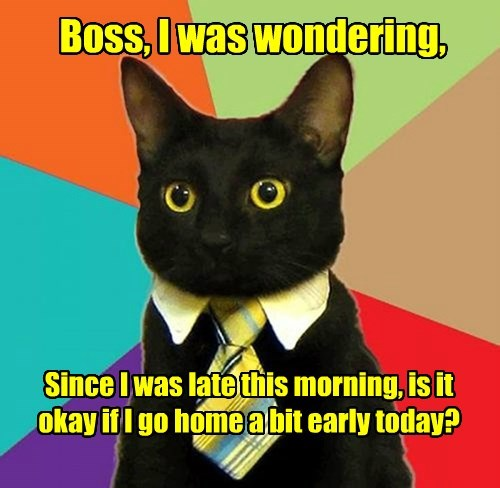 boss,cat,early,caption,home