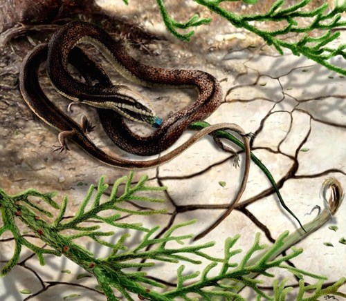 Snakes had four legs millions of years ago.