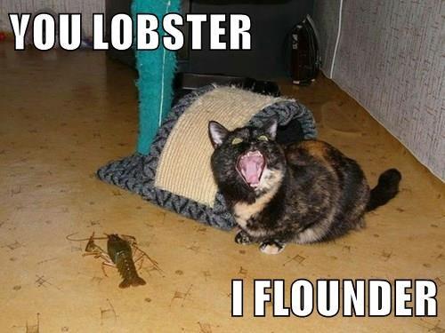 caption,Cats,funny