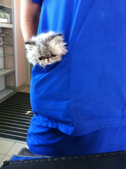 cute cats image When You're Too Small to Walk Everywhere Yourself, Get Someone With a Pocket to Carry You