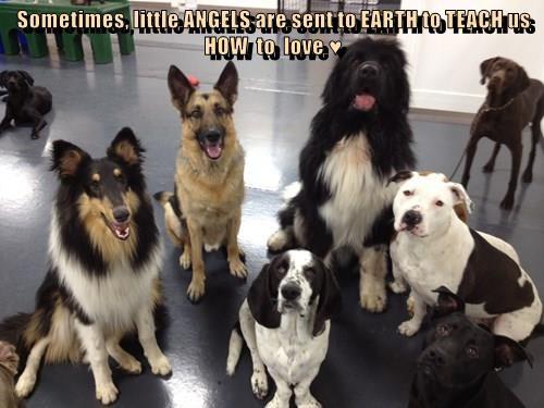 animals - 8542213376