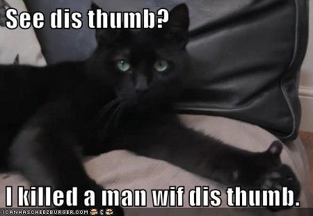 animals cat killed man thumb caption - 8542343168