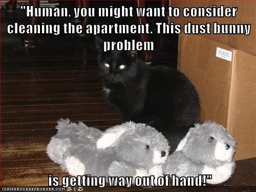 cat,dust bunnies,captions