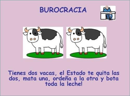 tienes dos vacas