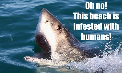 captions shark funny - 8542779648