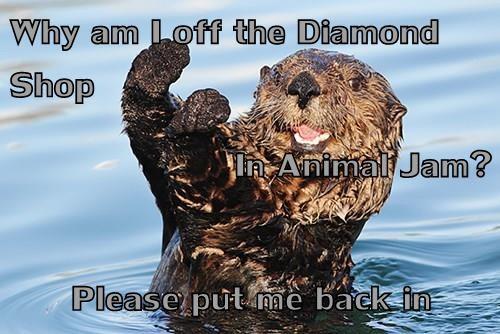 animals - 8542895872