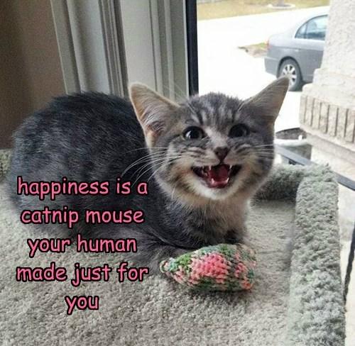 cat,catnip,caption,happiness,mouse