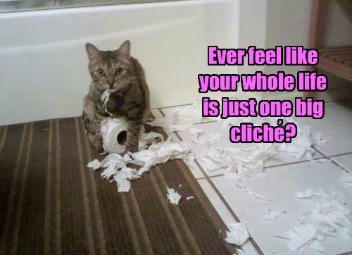 captions Cats funny - 8543130368