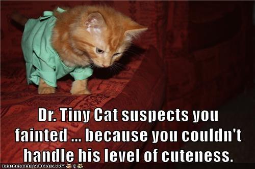 animals captions Cats funny dr tinycat - 8543144192