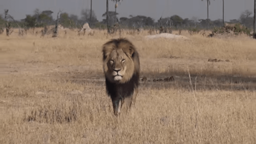 Lion Hunting Dentist draws everyone's ire.