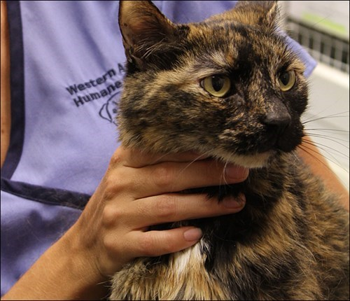 cute cats rescue Stowaway Cat Rescued After Surviving on a Sunken Ship