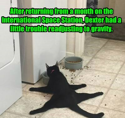 cat,space station,Gravity,captions