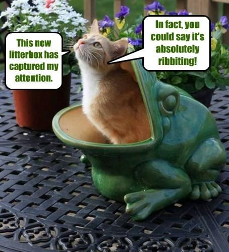litterbox,cat,riveting,caption