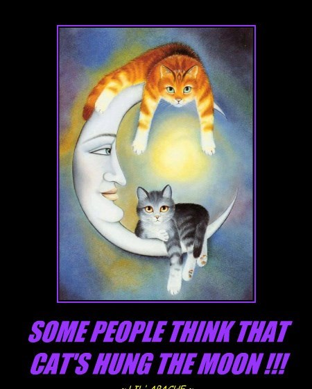 SOME PEOPLE THINK THAT CAT'S HUNG THE MOON !!!