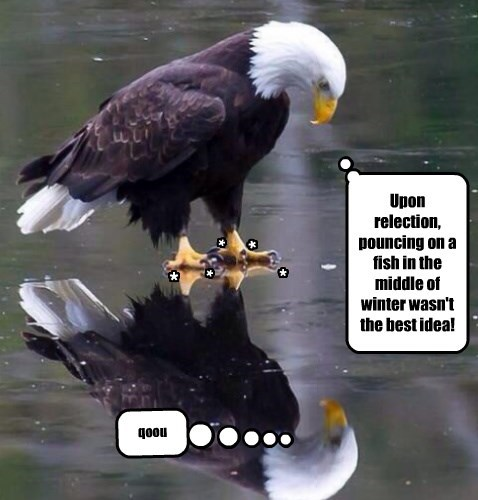 eagles captions funny - 8543451136