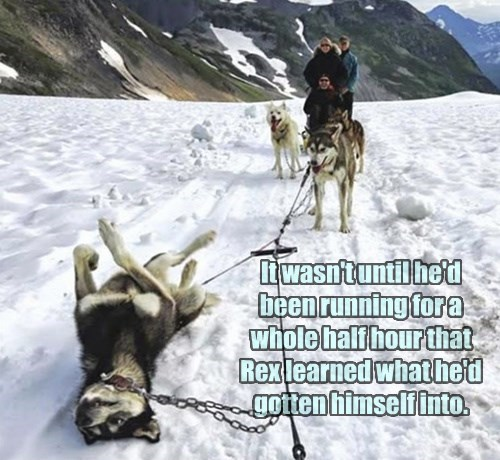 dogs funny captions - 8543473664