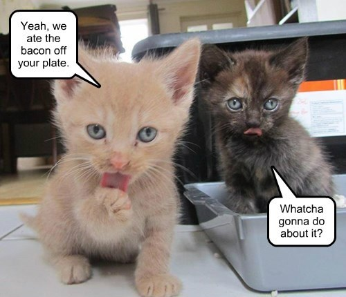 kitten caption Cats funny bacon