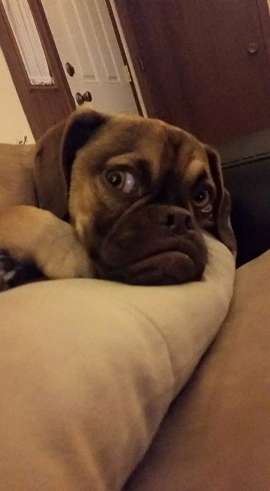 funny dogs image He Just Found a Monster Living Under the Bed