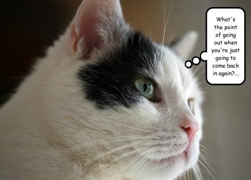 captions Cats funny - 8543784448