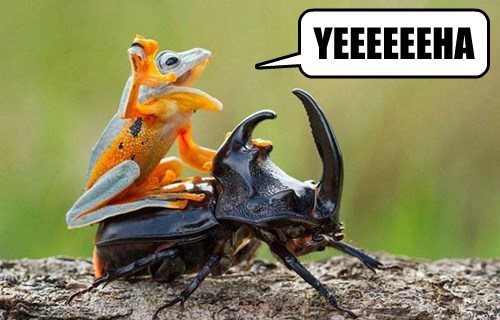 captions funny frogs - 8543911936