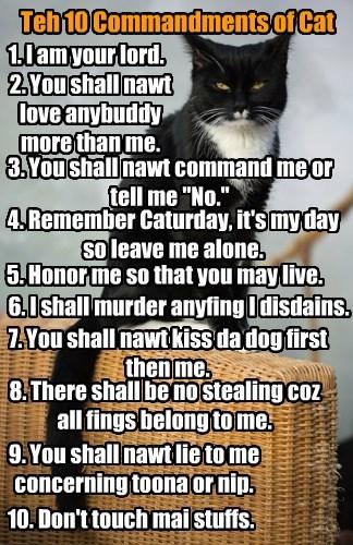 Teh 10 Commandments of Cat