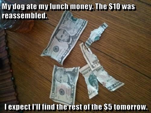 My dog ate my lunch money. The $10 was reassembled.  I expect I'll find the rest of the $5 tomorrow.