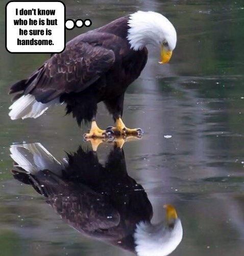 eagles,captions,funny